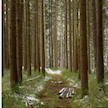 Preserving Forests Wildlife and Habitats Content Icon.png