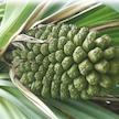 Explore Wonder Plants Content