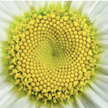 Fibonacci Content.png